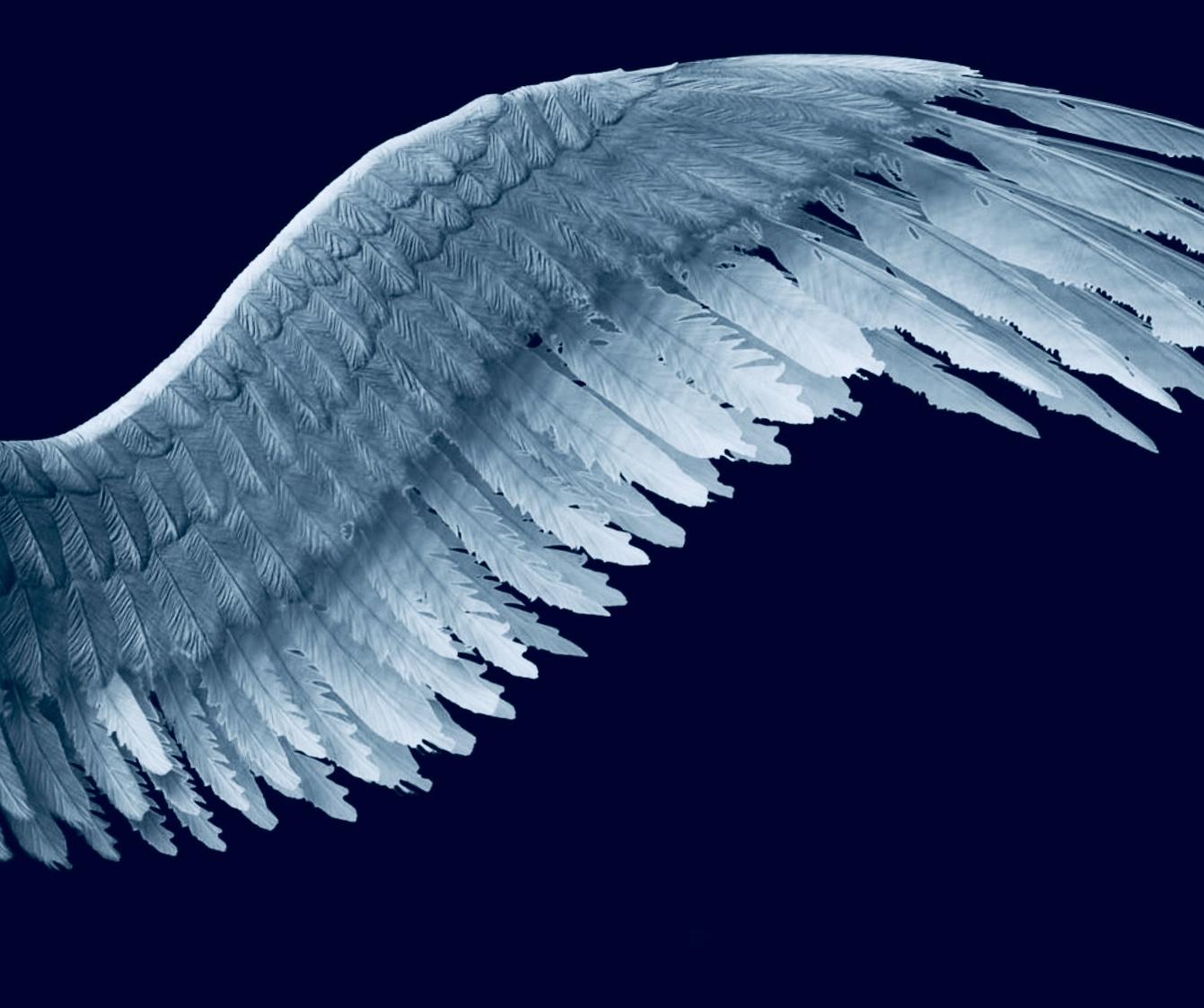 Eaglets wings